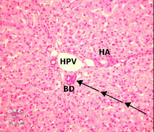 liver pig labels histology slide